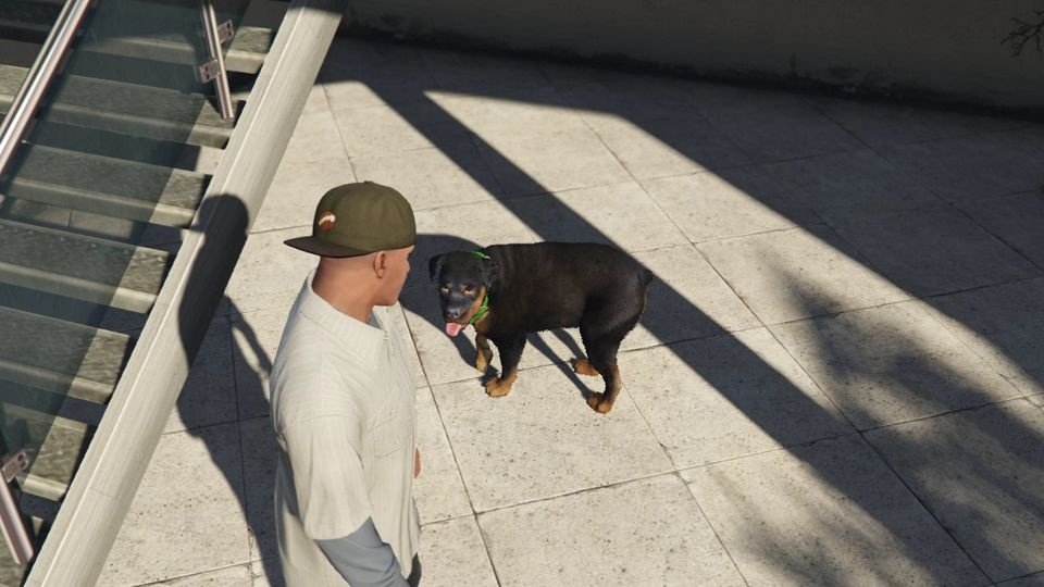 Walk and Play Fetch With Chop in GTA 5 — GTA Guide